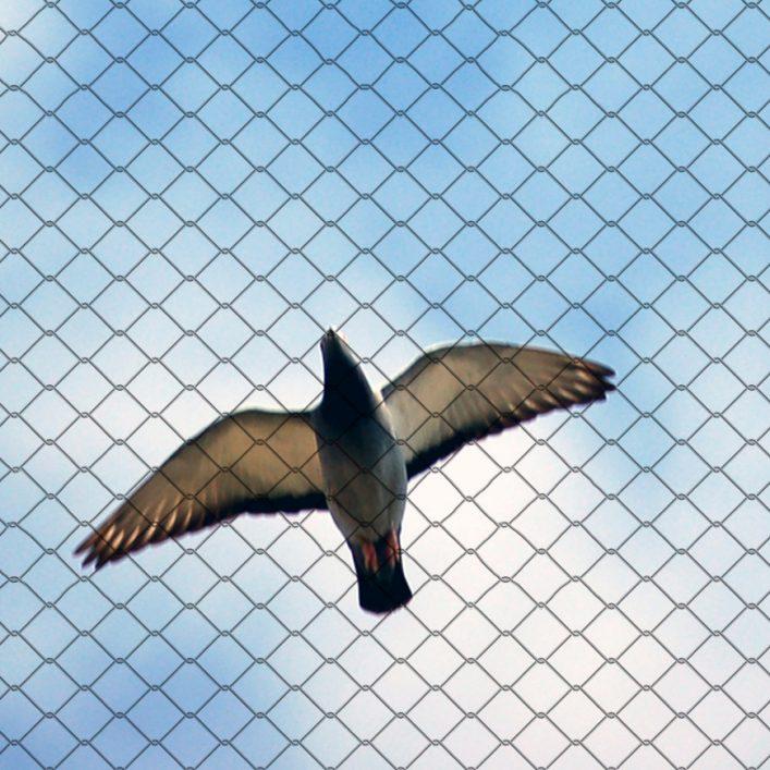 bird control devon