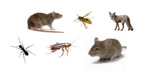 pest control plymouth