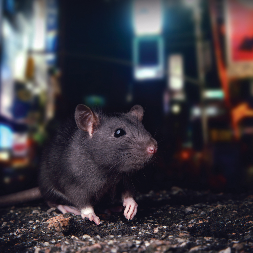 PLYMOUTH RODENT CONTROL