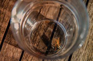 why do wasps sting