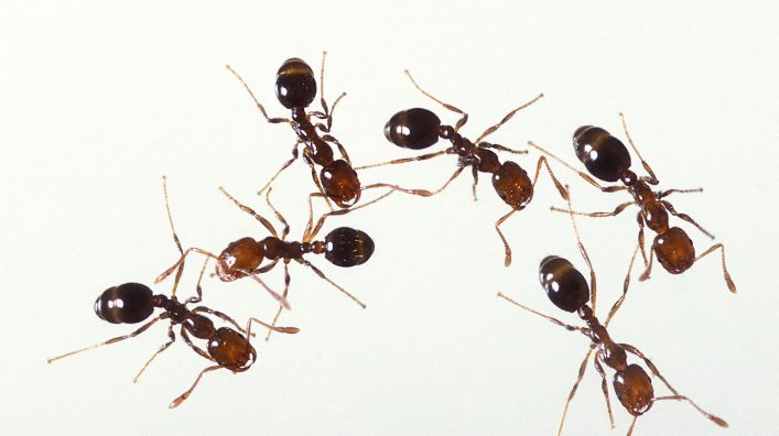 Plymouth ants removal