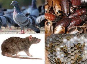 Pest control devon and cornwall