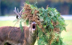 deer eat vegetation
