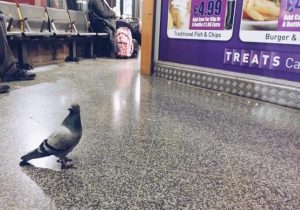 bird control at train stations