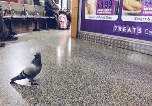 bird control at train stations