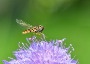 Plymouth pest control consultants will help you to determine what these insects are