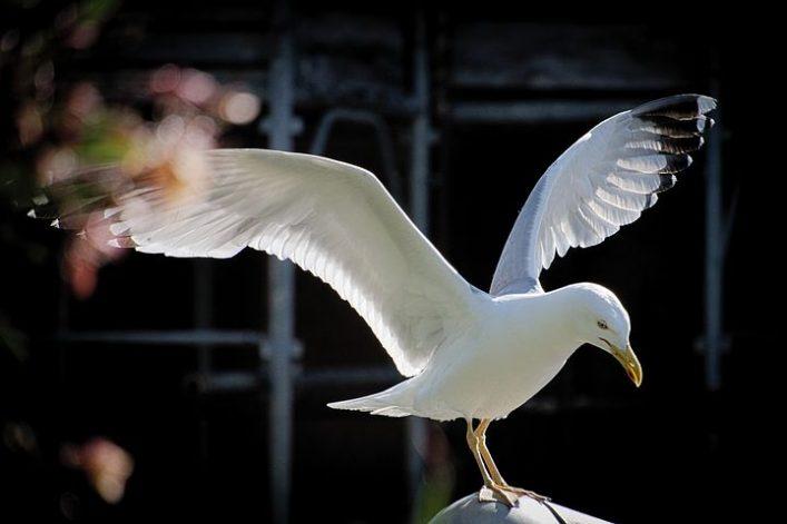 taunton bird control