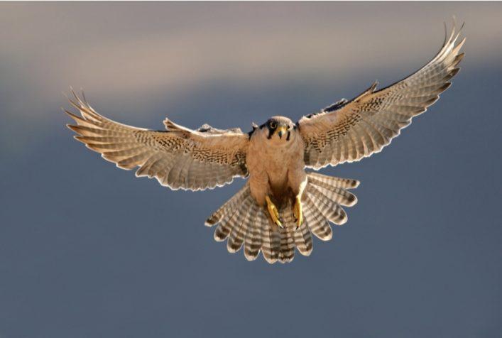 south west bird control